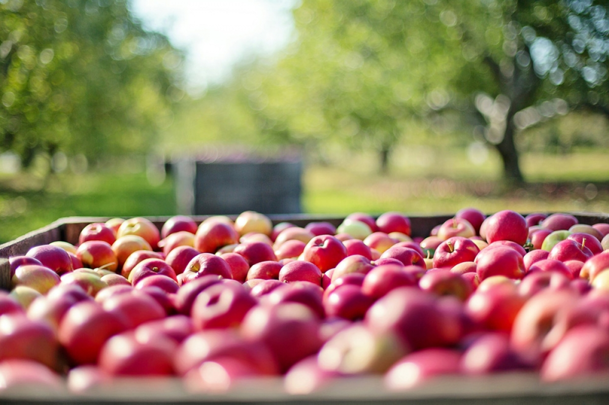 After latest acquisition, Riveridge to represent half of Michigan's fresh apple market